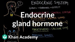 Endocrine gland hormone review
