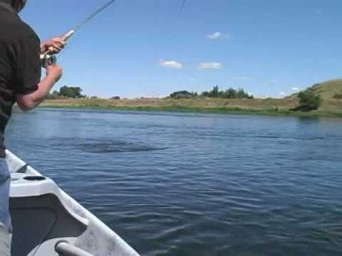 Fly fishing the missouri river youtube for Missouri out of state fishing license