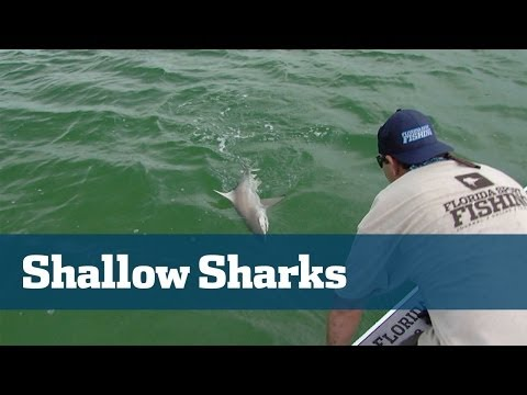 Shark Fishing; How To Rig For Sharks - Florida Sport Fishing TV