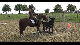 Das erste Mal Working Equitation - Kurs mit Solido