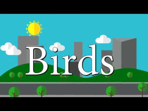Birds || Thomas Sanders and Dodie Animation