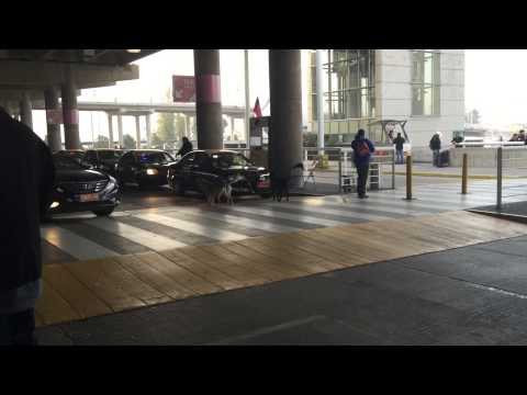 Crazy pack of dogs chase and attack taxi cab in Santiago Chile Airport