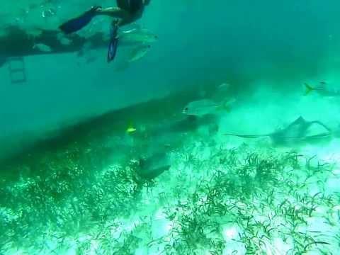 Shark Ray Alley (Unedited)