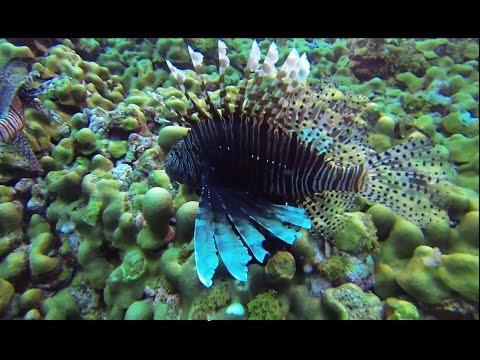 Flower Gardens - Gulf of Mexico Scuba Diving