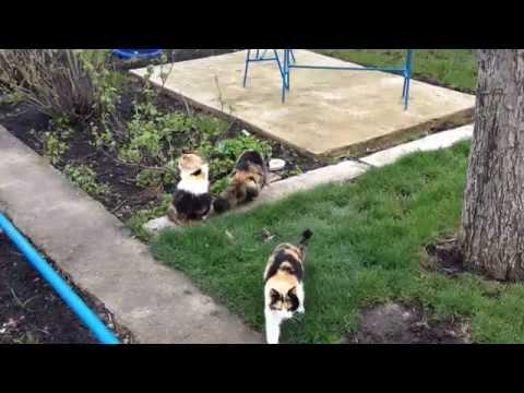 Игры кошки - igri-dla-