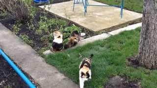 Три кошки трехцветные - СЧАСТЬЕ  в доме - 2 часть.