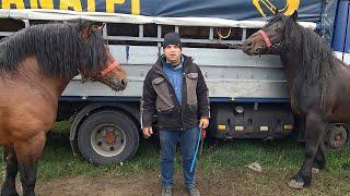 Na Derneku i konji od 12000 eura