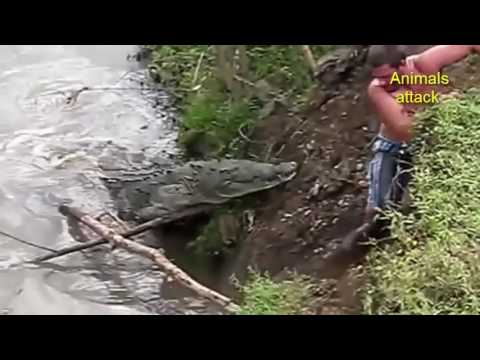 Extreme Animal Attacks On Humans Water Edition Shark,Giant ...