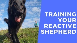 Ronnie - Training Your Reactive German Shepherd - Intensive Collect & Train Course