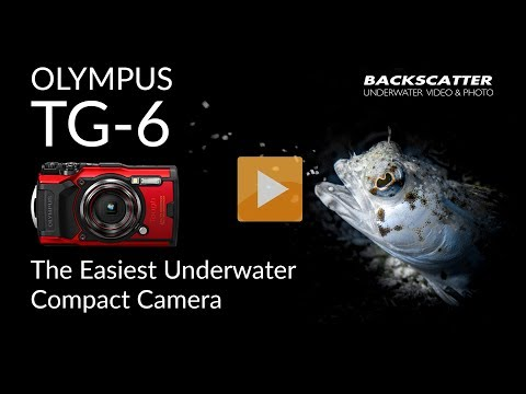 olympus-tg-6-|-the-easiest-compact-camera-for-underwater-photography
