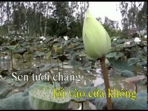 08. CHAP TAY NIEM PHAT.mpg