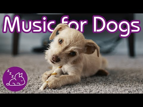 relaxing-music-and-dog-tv!-entertain-and-soothe-your-puppy!