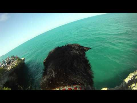 Dog Jumps Off Cliff GoPro HD