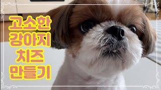 시츄 남복숭을 위한 세상 고소한 강아지 치즈만들기 / …