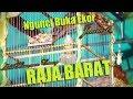 Ngunci Full Buka Ekor Kapas Tembak Raja Barat Juara  Milik Hermawan Canary  Mp3 - Mp4 Download