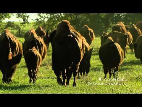 Food Rebel | Bob Jackson | Tall Grass Bison