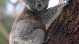 Australia | Wikipedia audio article