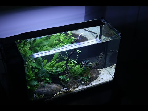 Low Tech Planted Tank Serenity 2 Month Update By Juscallmej