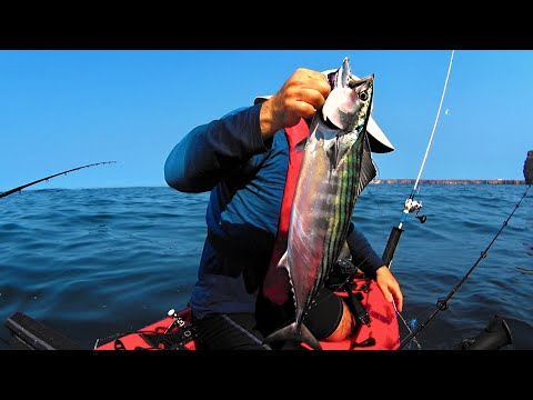 Sea Bass and Bonitos - Kayak Fishing on the Edge - Sagres - 1080HD 50fps
