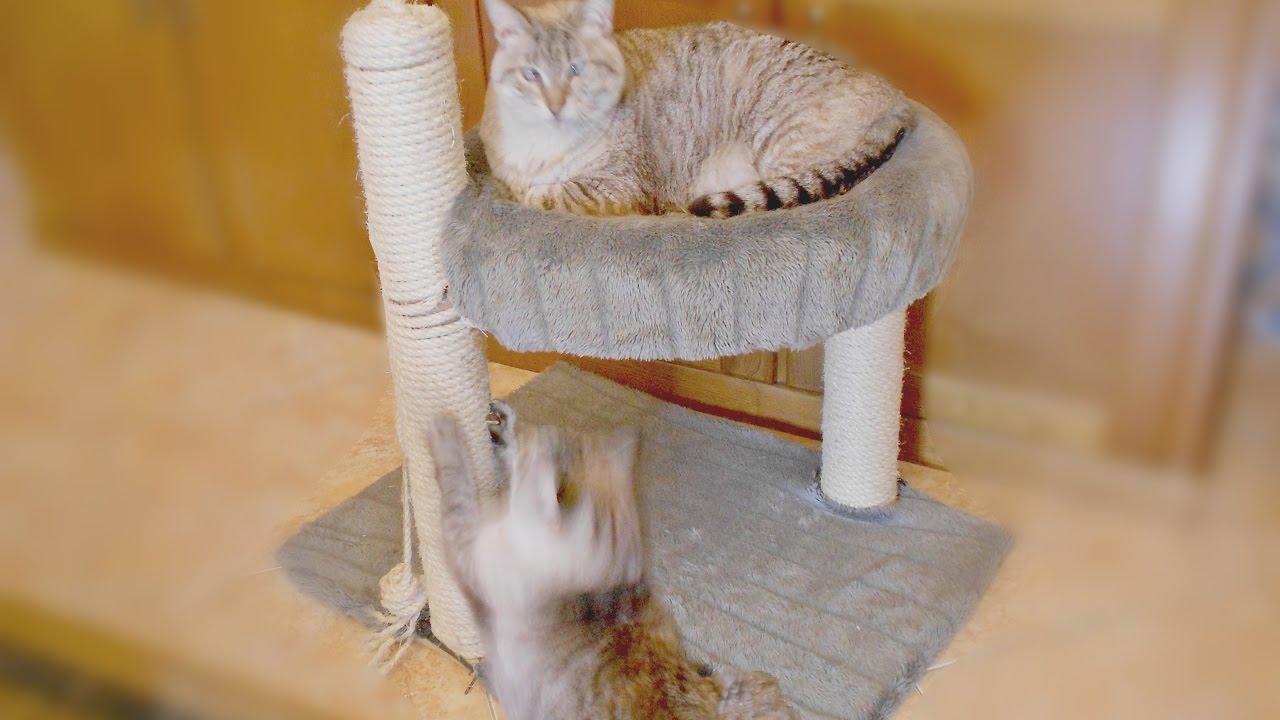 Diy cama para gatos com arranhador youtube for Cama para gatos