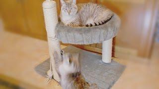 DIY/ Cama para Gatos com Arranhador