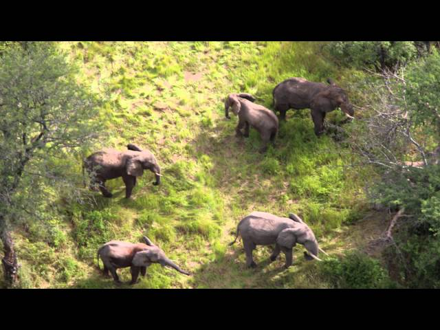 PAMS Foundation Aerial Surveillance work - Ruaha National Park