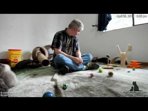 Gaia's Kittens - Return from Vet 4-29