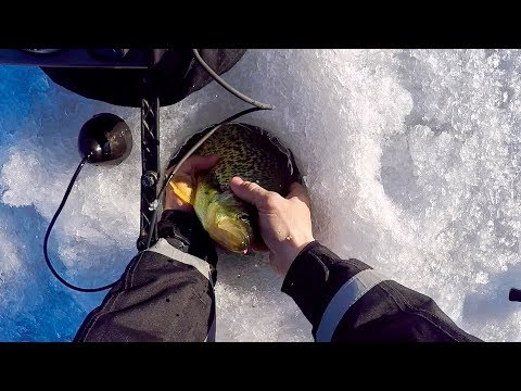 Late Ice Panfish Slam! (HUGE Crappie!)