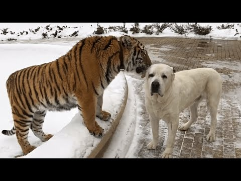 Funny Dog Logic Pet Video Compilation 2016