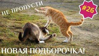 Приколы про животных Смешное видео про котов собак и не только Выпуск 26