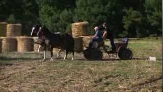 Święto konia Jabłonna 2013r.