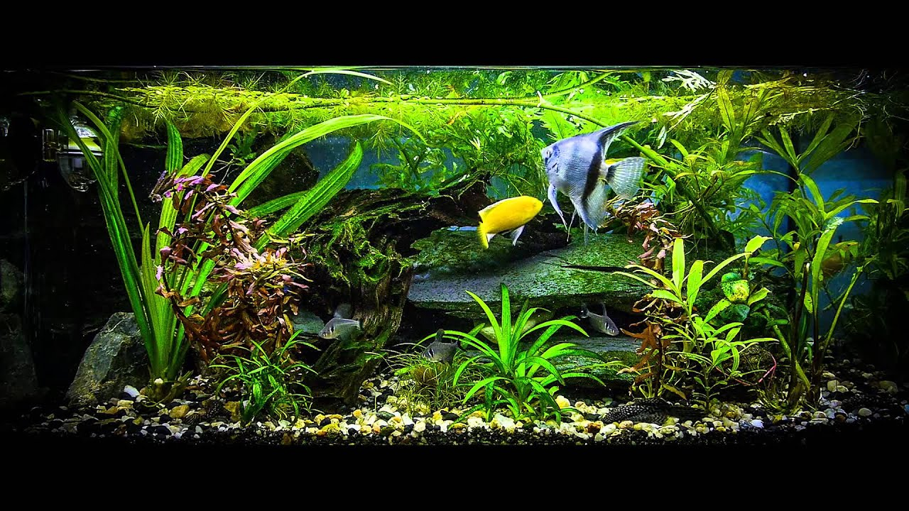 Aquarium screensaver fish tank 1080p hd - Real Aquarium Screen Saver Panasonic Gh3 And Raw Filter On Smart Video Layer In Photoshop Cc Youtube