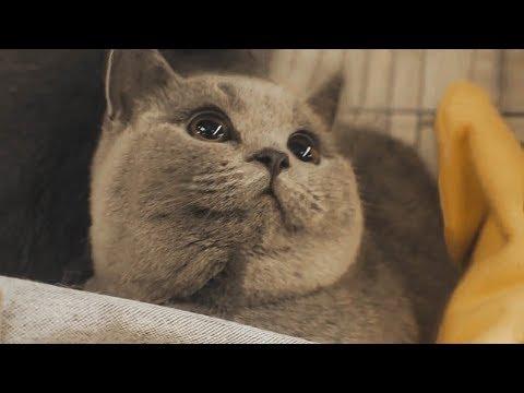 World Cat Show 2018 | Claw Arts