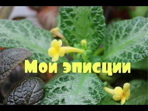 видео: ✿Все мои эписции✿ Обзор ✿ amethistic_glow ✿
