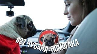 #27 Чубака-помогака / 2 тонны корма для собак и кошек