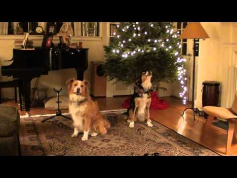 Dogs Sing