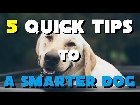 5 Quick Tips To A Smarter Dog - Dog Training Tricks For Dog Lovers