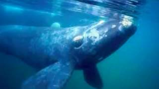 Whale cry - underwater whale sound#meditation