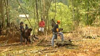 Pig Slaughter at Tana Toraja (Indonesia)