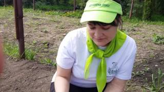 Сеем листовой салат! Тонкости посева.