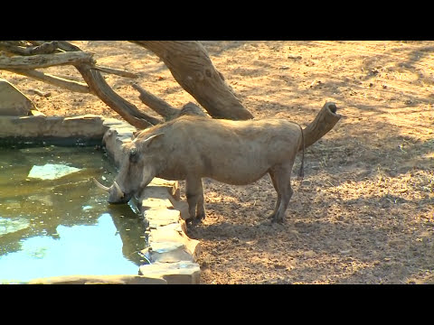 Will and Jimmy Primos Hunting African Game - Part 1