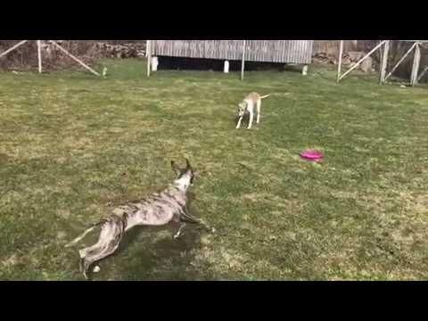 Dogs Having so much fun!