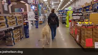 Irish Wolf Hound 'Kohn' | Awesome Transformation | Dog Trainer San Antonio