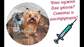Как сделать укол собаке, подкожная инъекция, укол в холку EliteDoggy
