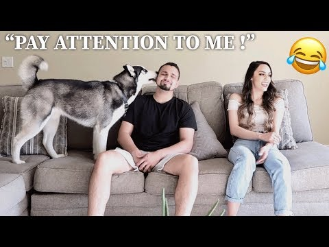 IGNORING OUR PUPPY PRANK! *HE HOWLS*