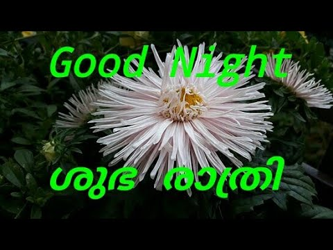 ശഭ രതര Malayalam Good Night Messages Greetings