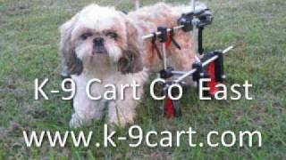 "Shih Tzu ""georgie"" Gets A Four-wheel Dog Wheelchair"