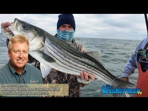November 16 2017 new jersey delaware bay fishing report for Delaware bay fishing report