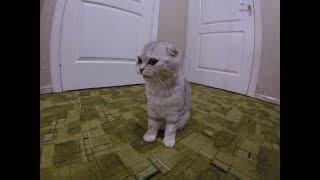 😻 Мяуканье Котенка Хлои 2 День в Новом Доме 🐱 Котенок ищет маму-кошку 🐱 Dear Kitten Chloe
