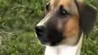 Собака умеет говорить *МАМА*!